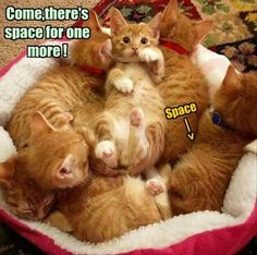 Which Litter Box Should I Use? - LOLcats is the best place to find and submit funny cat memes and other silly cat materials to share with the world. We find the funny cats that make you LOL so that you don't have to. Funny Cats, Funny Animals, Cute Animals, Cute Kittens, Cats And Kittens, Kitty Cats, Ragdoll Kittens, Bengal Cats, I Love Cats