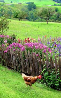 i want a beautiful garden, a house with lots of trees, and chickens :)