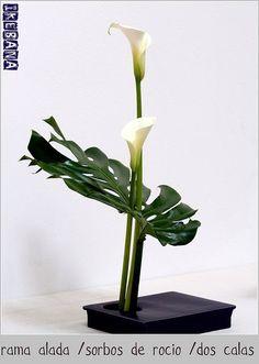 Ikebana - monstera leaf and calla lilies Ikebana Arrangements, Creative Flower Arrangements, Ikebana Flower Arrangement, Beautiful Flower Arrangements, Floral Arrangements, Beautiful Flowers, Exotic Flowers, Blue Flowers, Deco Floral