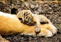 Baby holding on to mommy