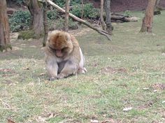At the monkey forest.