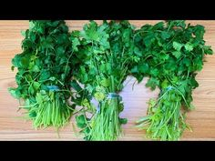 Cómo Conservar el Cilantro Fresco por Mucho Tiempo - YouTube Cilantro, Fresco, Spice Chart, Emergency Food Storage, Cooking Measurements, Plant Paradox, Puerto Rican Recipes, Homemade Spices, Cooking Ingredients