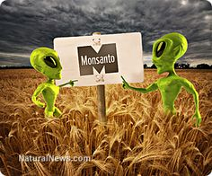 Monsanto pushes bizarre conspiracy theory to deflect blame for GE wheat contamination of commercial crops