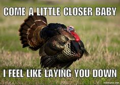 Turkey Fever                                                                                                                                                                                 More
