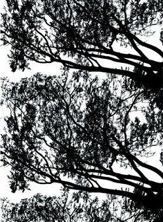 Tuuli-kangas (valkoinen, musta)   Marimekko