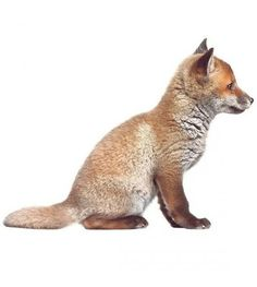 KEK Amsterdam Muursticker Baby Fox bruin 34x26cm - wonenmetlef.nl