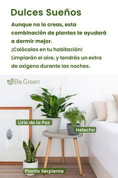 Eco Garden, Garden Plants, Indoor Plants, Home And Garden, Green Life, Growing Plants, Plant Decor, Beautiful Gardens, Home Deco