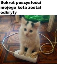 Memes Humor, Wtf Funny, Funny Jokes, Reaction Pictures, Funny Pictures, Polish Memes, Funny Animals, Cute Animals, Funny Cat Compilation