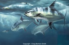 In the Zone Beluga Sturgeon, Gone Fishing, Fishing Tips, Offshore Fishing, Marine Conservation, Big Brown, Rainbow Trout, Fish Art, Art Pages