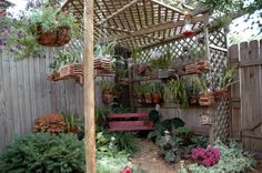 his is where I summered my orchids before we moved