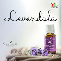 A levendula friss, édes, növényi, füves illata nyugtató és frissítő hatású. Mivel ez az összes illóolaj közül a leginkább sokoldalú, minden háztartásban ott a helye. A levendulát nagyra becsülik a bőr- és szépségápolás terén. Minden, Living Oils, Young Living, Lavender, Pure Products, Young Life, Lavandula Angustifolia