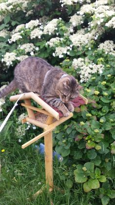 """""""The birds will never see me up here!"""""""