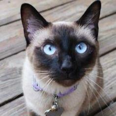 Blue eyes --Queen Esther