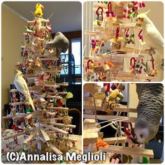 Christmas tree just for parrots! Made with wood and decorated with many toys and cool stuff to chew on every branch! Diy Parrot Toys, Diy Bird Toys, Parrot Pet, Parrot Play Stand, Bird House Kits, African Grey Parrot, Bird Aviary, Crazy Bird, Wood Bird