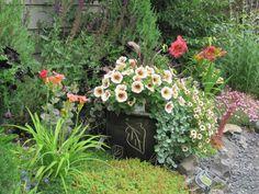 Container with Potunia 'Cappuccino' from the Petunia Potunia Series, Calibrachoa Can-Can 'Mocha' and spiller Dichondra 'Silver Falls'