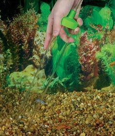 The How and Why of Aquarium Water Changes and Gravel Cleaning