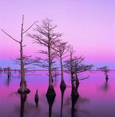 Mattamuskeet Lake, NC, at dusk