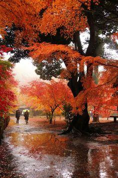 Autumn in the rain.