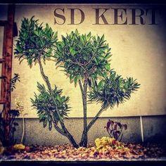 Kerti dekoráció Land Scape, Plants, Instagram, Lawn And Garden, Plant, Planets