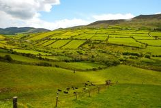 Weaving Wall Hanging, Green Fields, Art Background, Emerald Green, Countryside, Grass, Stock Photos, Island, Landscape