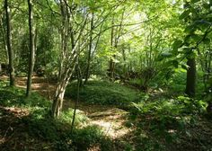 Woods at Cotchford