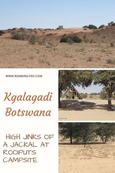 High jinks of a jackal at Rooiputs campsite Kgalagadi Botswana — Roaming Fox Africa Destinations, Amazing Destinations, Picnic Area, The Dunes, African Safari, Rest Of The World, Africa Travel, Campsite, South Africa