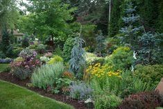 Conifers add texture in the garden Plants, Evergreen Landscape, Conifers Garden, Garden Types, Garden Landscape Design, Conifers, Garden Tours, Garden Shrubs, Outdoor Gardens