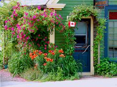 An abundance of climbing roses, lilies and (soon to flower) clematis grace this small residence in the center of Mahone Bay. Great Places, Places Ive Been, Places To Go, O Canada, Canada Travel, The Beautiful Country, Beautiful Places, Atlantic Canada, Garden Pictures