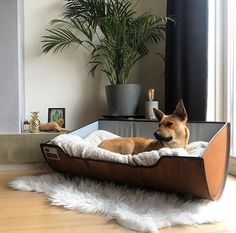 Tough Dog Basket & # Oilbarrel XXL & # (Color básico) ® - about cats - Animal Room, Tough Dog Beds, Minimalist Bed, Diy Dog Bed, Dog Rooms, Pet Furniture, Pet Id, Dog Houses, Basic Colors
