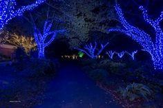 Meadowlark's Winter Walk of Lights from November 16th - January 6th
