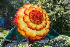 LEGO Begonia | Flickr - Photo Sharing!
