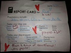 Adopted dog Rue is doing great in his forever home and wanted to share his report card, LDDR dogs are so smart!