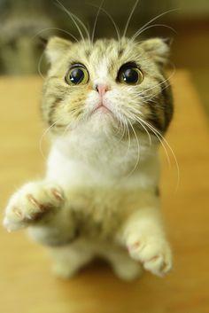 So cute. omg Iwant that kitty so bad