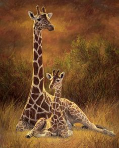 www.suprblog.estranky.cz - žirafy