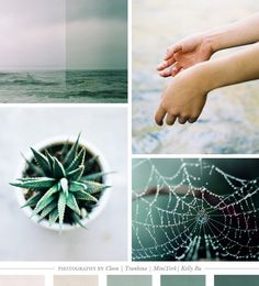 Color Inspiration Daily: 08. 28.12 - Home - Creature Comforts - daily inspiration, style, diy projects + freebies