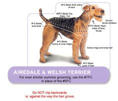 Dog Clippers - Airedale Terrier (and Welsh Terrier) Grooming Chart Welsh Terrier, Airedale Terrier, Terrier Galés, Dog Grooming Styles, Dog Grooming Salons, Dog Grooming Tips, Poodle Haircut, Dog Clippers, Malteser