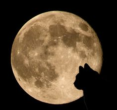 Harvest Moon #cat #halloween