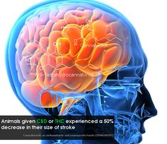 CBD analysis on the brain