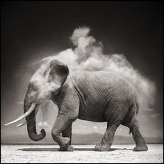 """natural_gesture"" - african fascination #nickbrandt #photography #africa"