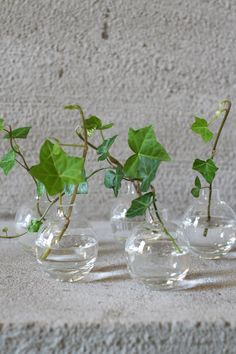 Pin on Flowers and Glass Vases Pin on Flowers and Glass Vases Ivy Plants, Indoor Plants, Indoor Water Garden, Deco Nature, Shabby Flowers, Vase Centerpieces, Arte Floral, Growing Flowers, Amazing Flowers