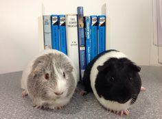 Southeast's Joe and Frank, the Hardy Pigs.