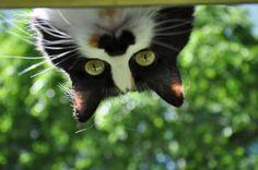 Cleo wants to play peek a boo!