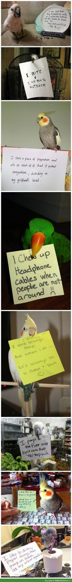 Bird Shaming... tsk tsk tsk! Makes me realize how good my bird is (or how much worse she could be if she put her mind to it)!