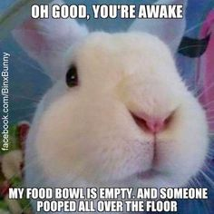 Guess I like to collect things. Here are some memes that have been found around the internet and perhaps been featured in a Rabbit Ramb...