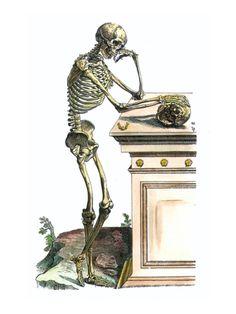 Vesalius: Skeleton, 1543 Print by Andreas Vesalius at Art.com