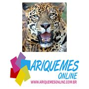 TWITTER ARIQUEMES ONLINE Photo And Video, Twitter, Animals, Animais, Animales, Animaux, Animal, Dieren