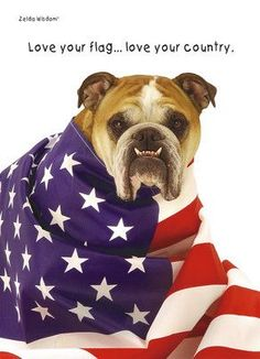 english bulldog on 4th of july - Google Search
