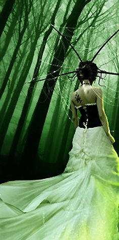 The Enchanted Forest | Modern Fairytale | cynthia reccord
