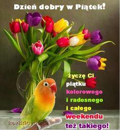 Angel Wallpaper, Parrot, Humor, Plants, Bonjour, Parrot Bird, Humour, Moon Moon, Flora