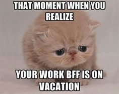 Work Quotes : 28 Memes Everyone Who Works In An Office Will Understand Memes Humor, Job Humor, New Memes, Nurse Humor, Cats Humor, True Memes, Funny Humor, Jokes, Funny Memes About Work